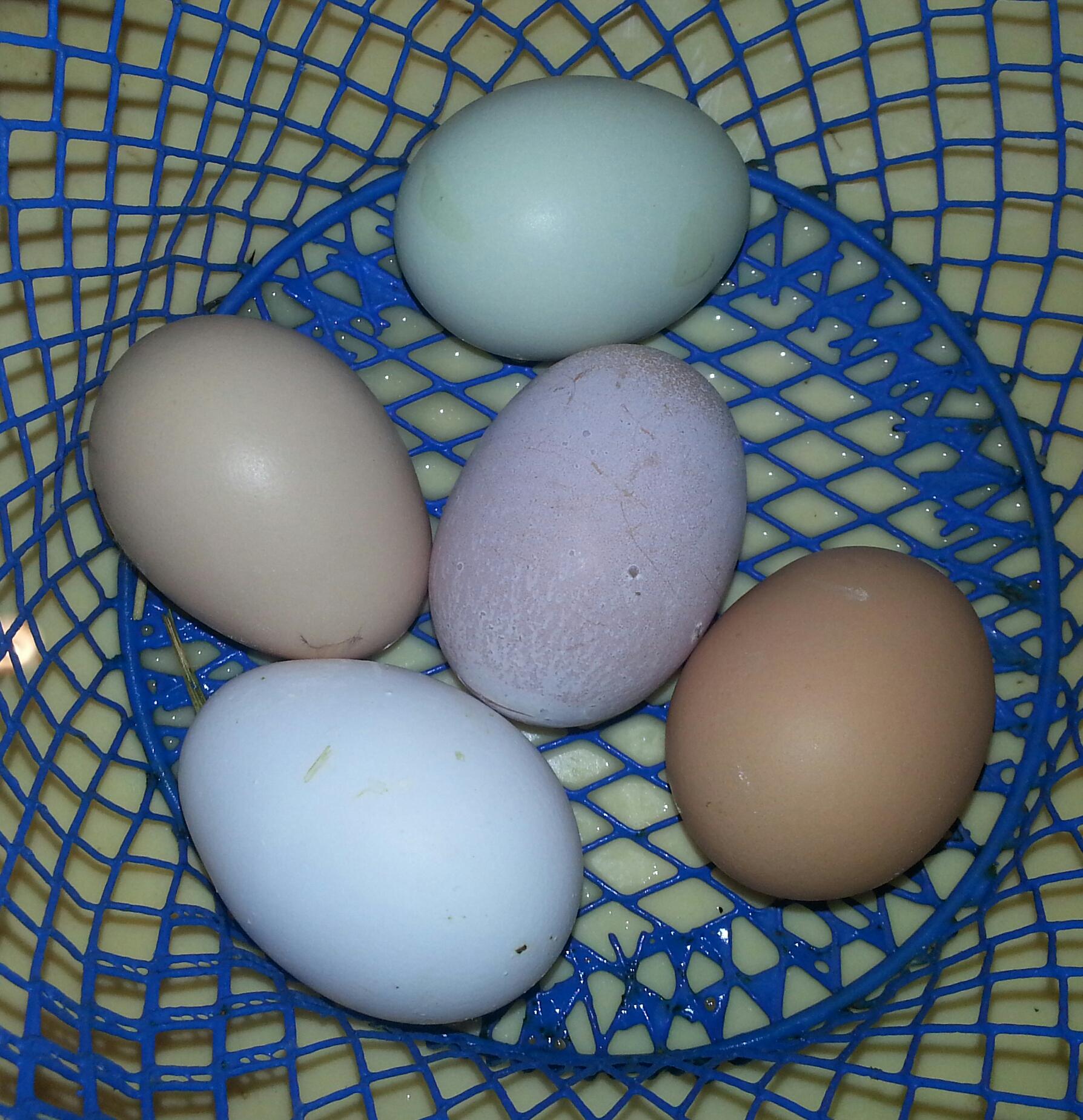 sell eggs