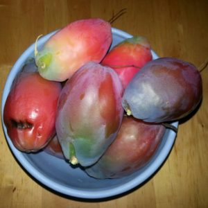 20141106_cereus cactus fruits