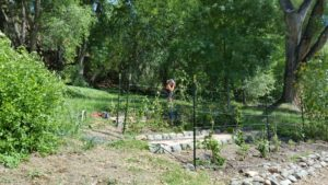 Terra Rose Fertile Farms raspberry patch