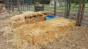 straw mulch raised bed lasagna garden