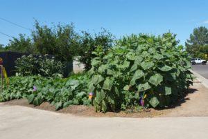 sunken garden 2