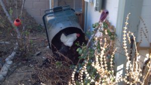 2012-3-29-040-chicken-compost