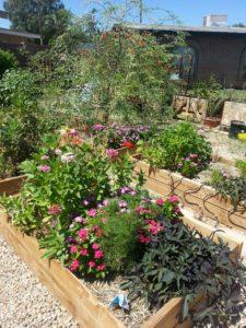 front-yard-garden-flowers