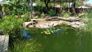 Pond in edible landscaping