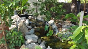 edible landscaping water gardenw