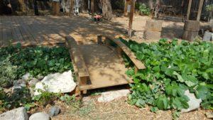 edible landscaping water gardenw