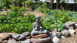 edible landscaping water gardens