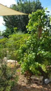 edible landscaping fruit trees