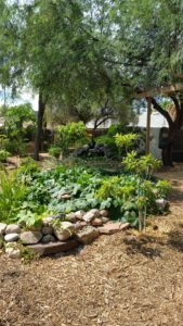 beautiful edible landscaping