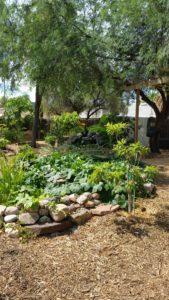 beautiful edible landscaping