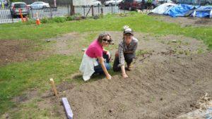 Youth Farm school garden