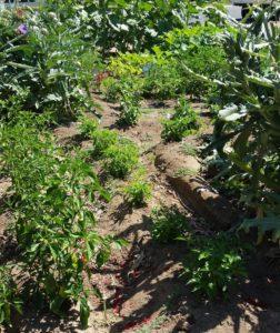 sunken gardens berms