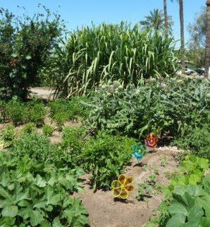 lush sunken gardens