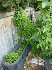 Backyard Permaculture Raised Beds