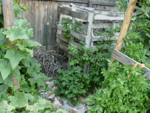 Backyard Permaculture Compost
