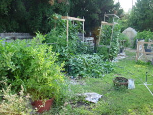 Backyard Permaculture