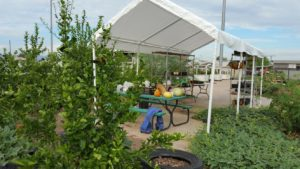 garden_tent_small