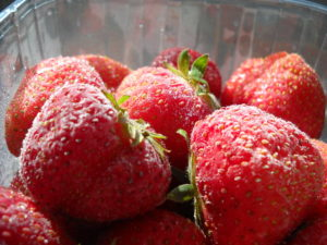 Growing and freezing strawberries