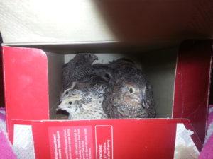 quail aviary