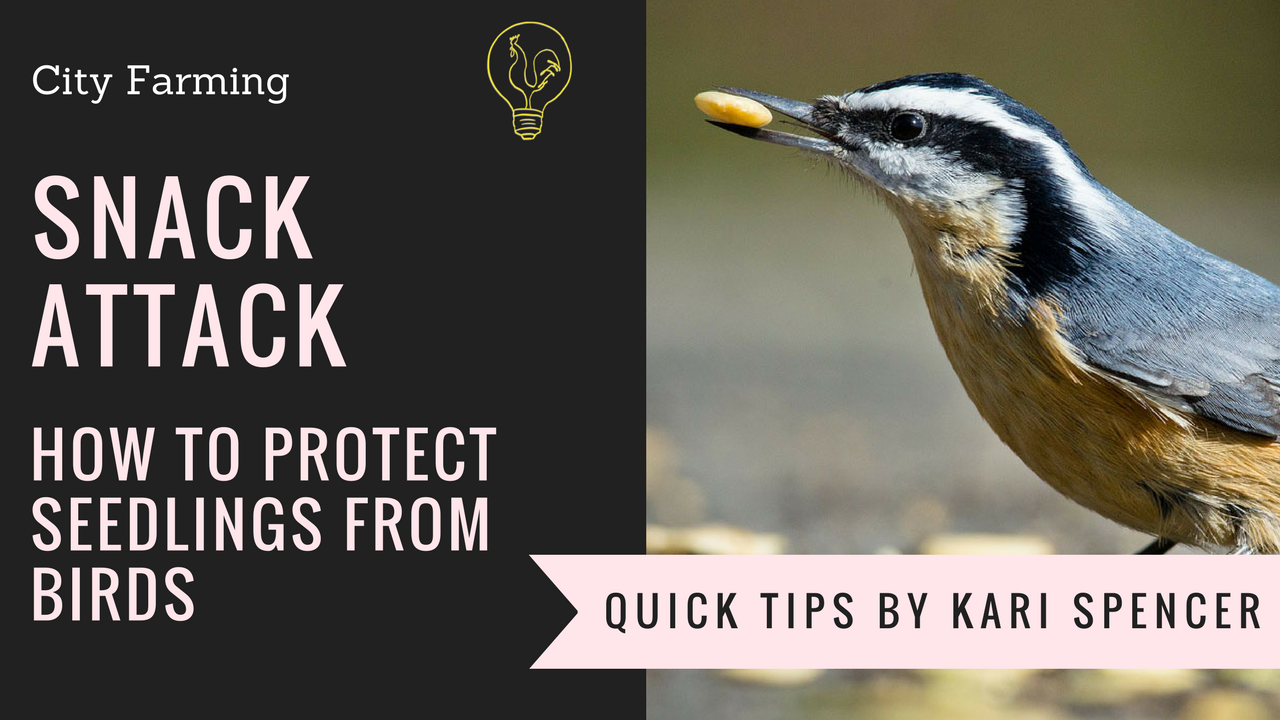 protect your garden from birds