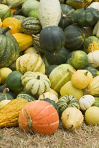 grow heirloom pumpkins